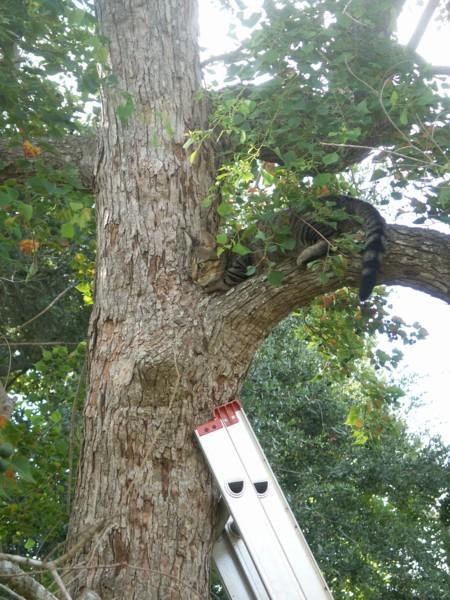 Missy In Tree